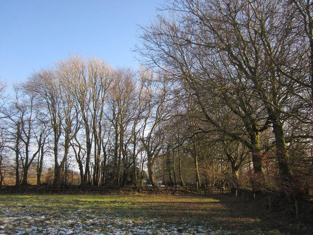 Corner of field, Hackpen Hill