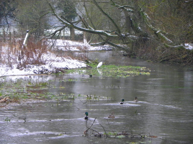 River Ebble, Broad Chalke