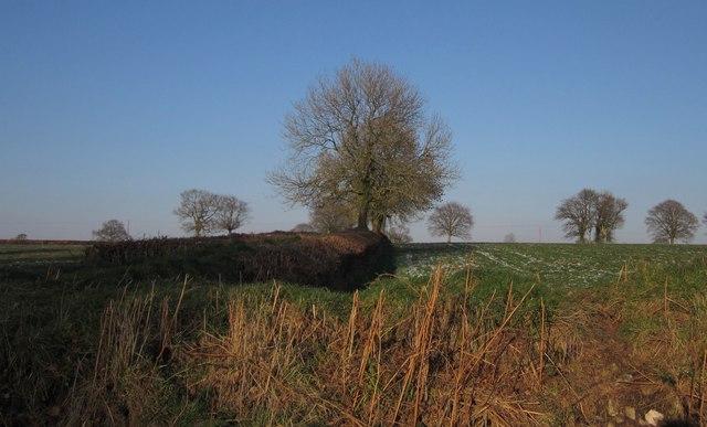 Field boundary, Hackpen Hill