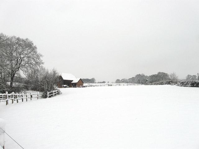 Bull Field