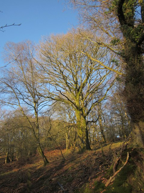 Woodland on Hackpen Hill