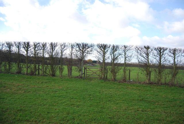 Gate in a hedge