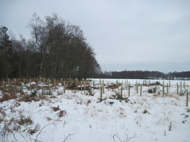 Griff  Wood  and  New  Planting