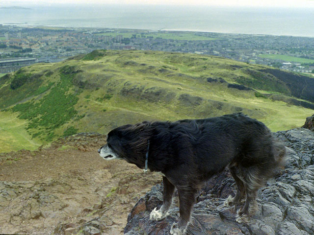 Windswept dog on Arthur's Seat, 1984