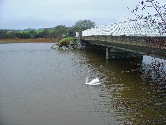 Newport Bridge with Swan