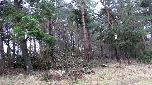 Pine woods, St Ford Links