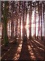 SE3211 : Wheatley wood. by steven ruffles
