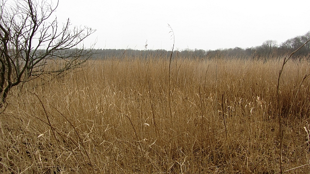 Reed beds,  Kilconquhar