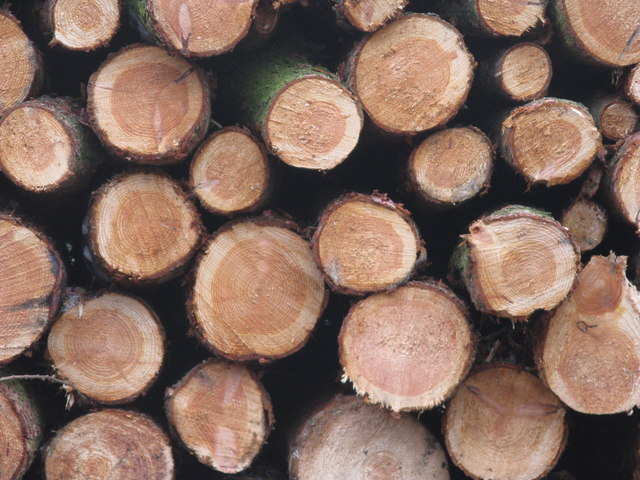 Chopped wood!