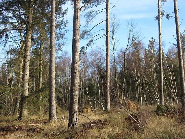 Clacherdean Wood