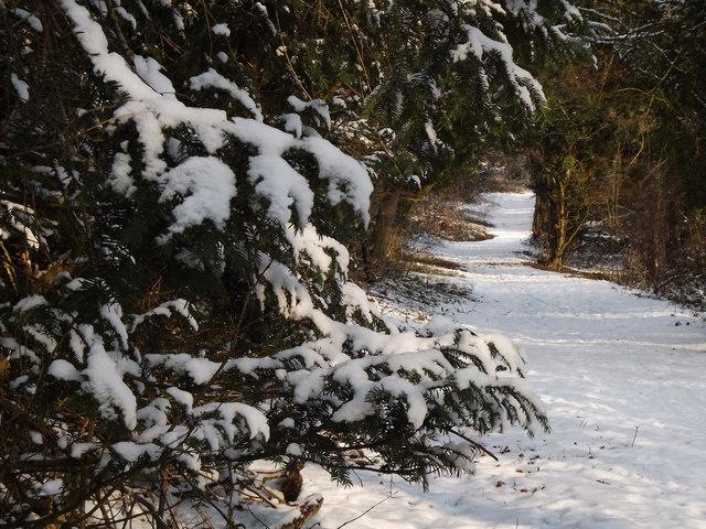 Winter, North Downs Way