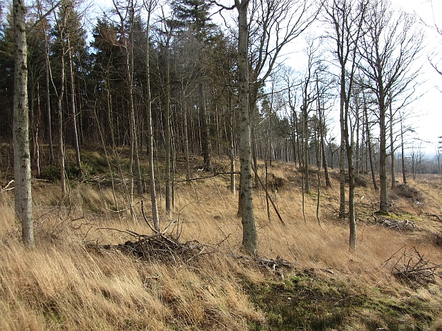 Woodland, Coulston