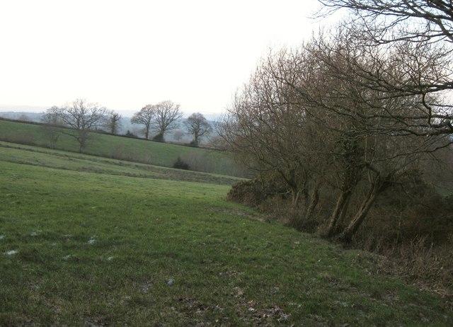 Pasture near Blackborough
