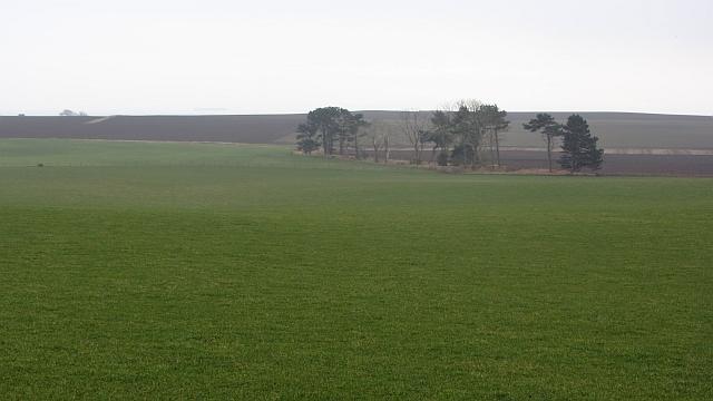 Grass field, Balbuthie