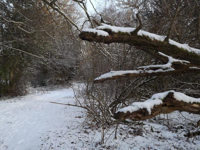 Snowy North Downs Way