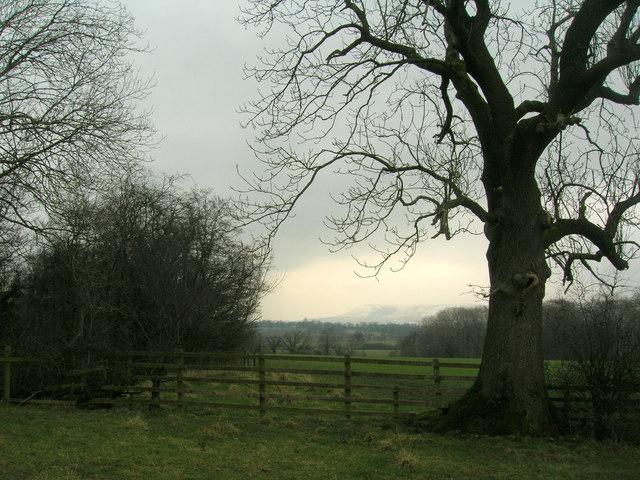 Winter scene: Ribble Valley