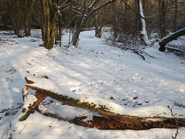 North Downs Way Winter