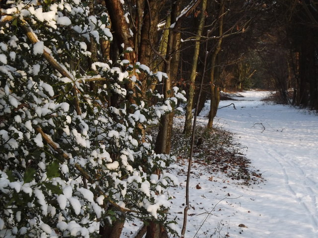 Winter on the North Downs Way