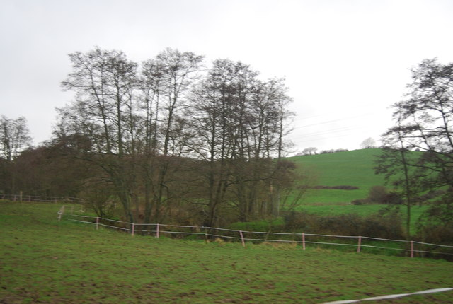 Trees along the River Brit