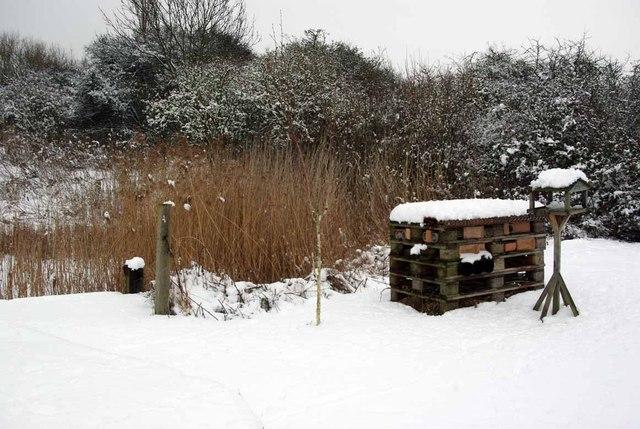 Icing in Ian's Garden