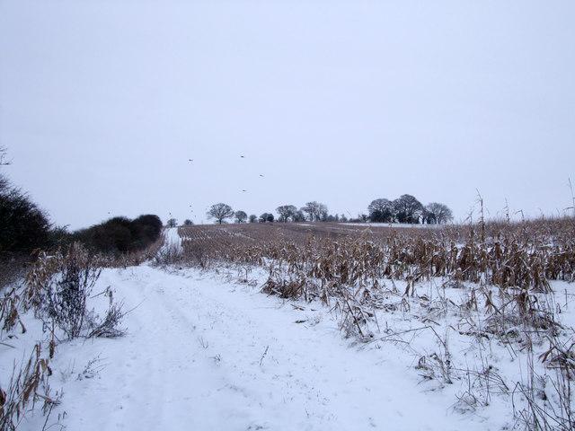Bridleway near Blackrabbit Barn