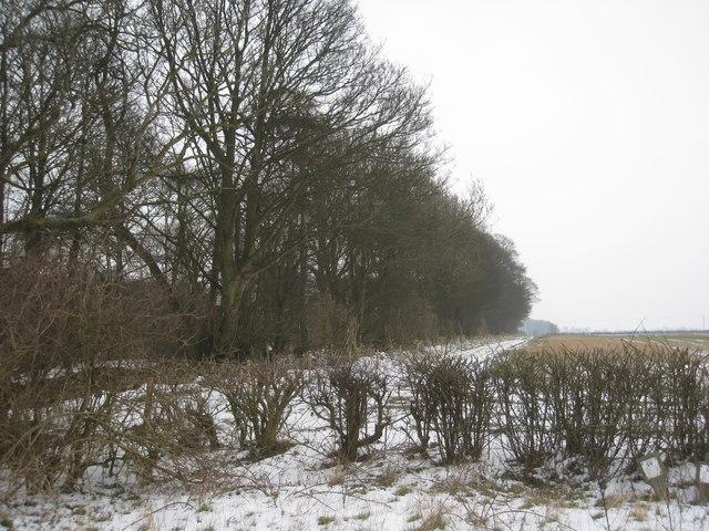 Alongside Hare's Wood