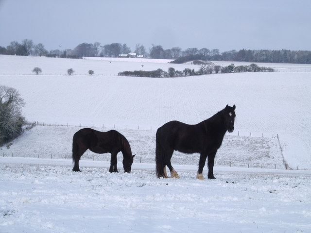 Horses, Warren Farm
