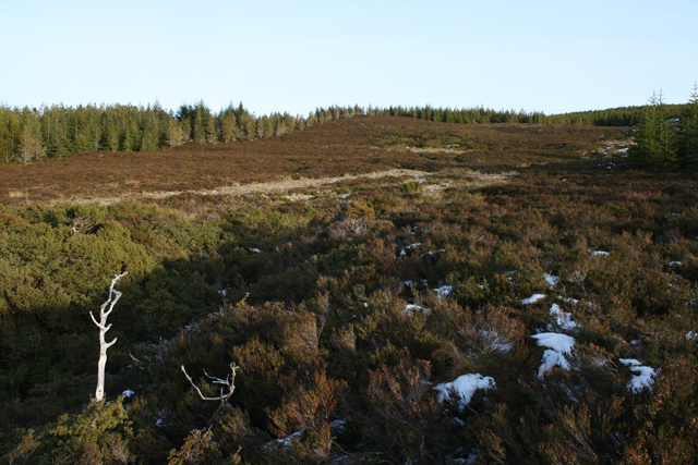 Clearing in plantation on Carn Gleann an Tairbidh