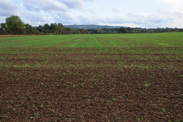 Arable land at Wick