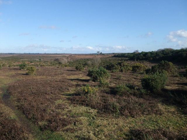 New Forest heathland near Thorney Hill