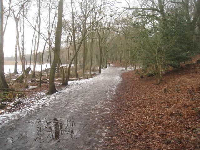 Northern margin of Fleet Pond