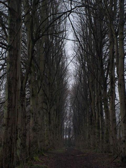 Avenue in Pollok Park