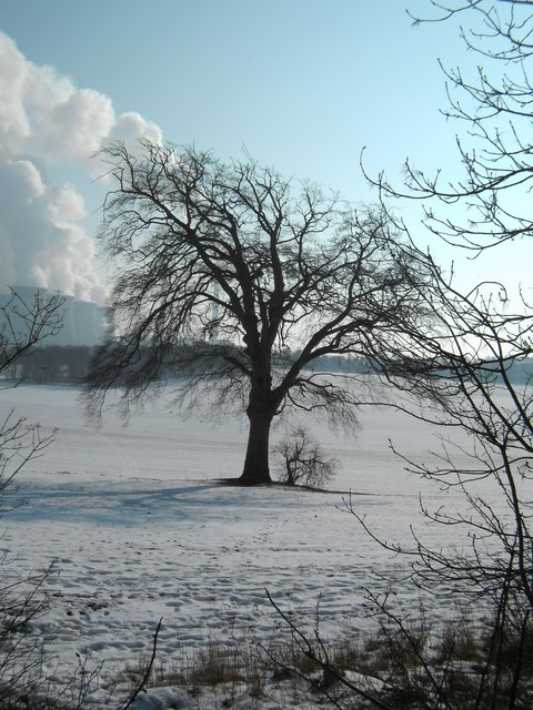Lone tree in Fryston Park