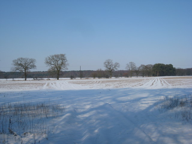 View from Sands Plantation towards Nettleton Wood