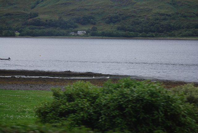 Wildfowl on the shores of Loch Linnhe