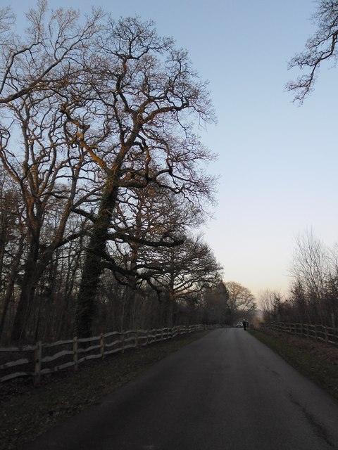 February  at dusk on the drive approaching Stansted House