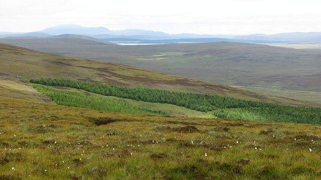 Plantation, Allt Ceann a' Bheithe