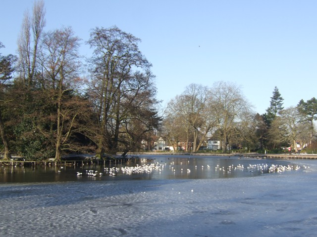 Winter in the West Park