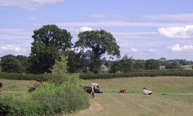 Pasture north-west of Gnosall Heath, Staffordshire