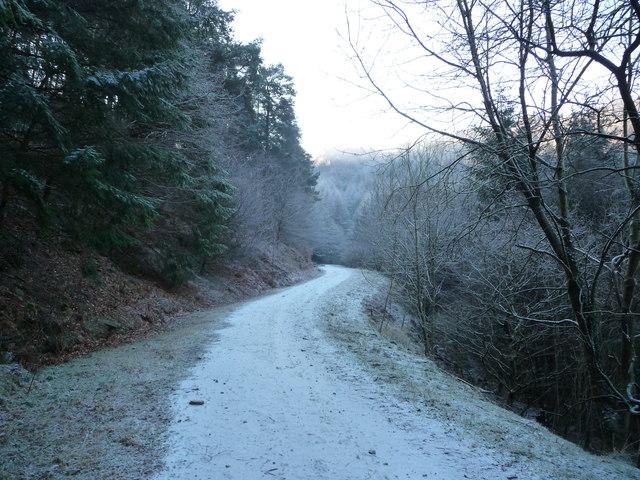 Steep forestry track above Cwm Gwyddon