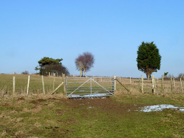 Gate and trees