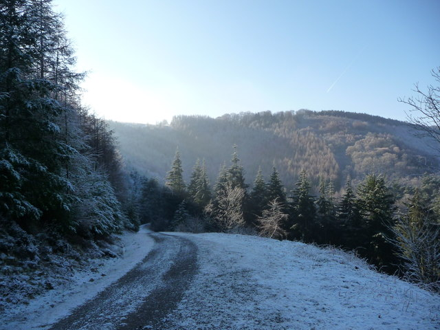 Track high in the forestry plantation above Cwm Gwyddon