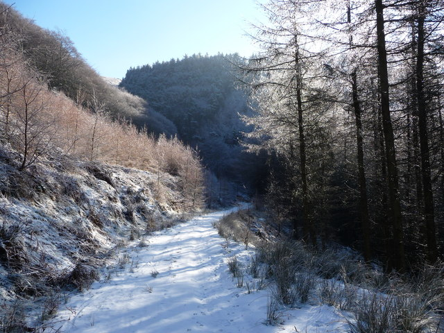 High track in the forestry in winter