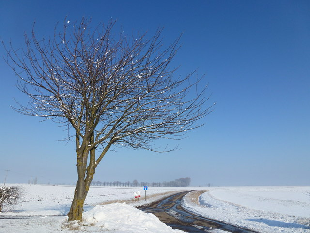 Tree and snow in winter sunshine