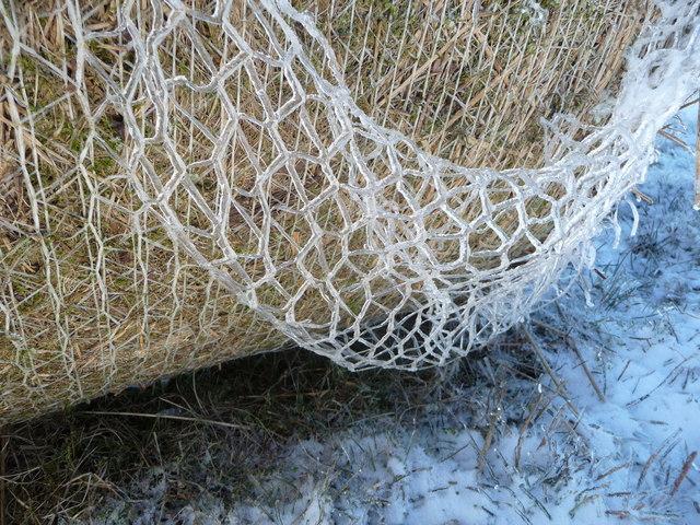 Close-up of winter on Mynydd Maen