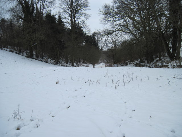 Snow  covered  Pond  and  Track  into  Blansby  Park  Wood