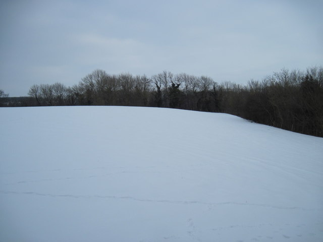 Snow  Field  and  Wood
