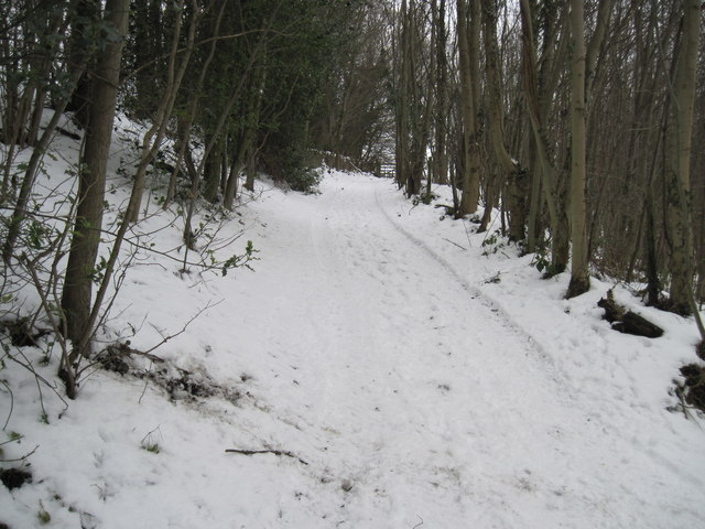 Track  up  to  Blansby  Park