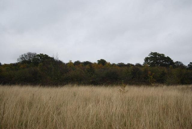 Reeds, Northward Hill Reserve