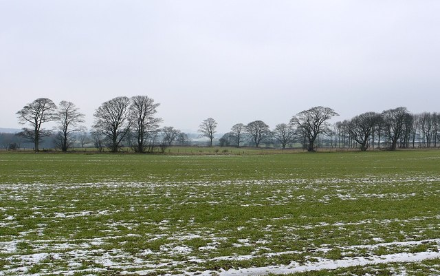 Fields and winter trees north of Nesbitt Hill Head